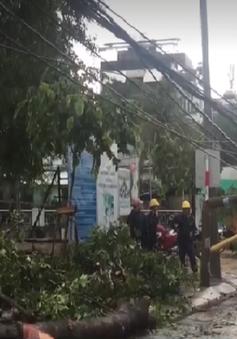 TP.HCM: Mưa lớn, cây xanh ngã đổ đè gãy cột điện