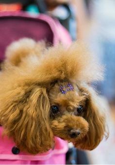 Chăm sóc thú cưng - Ngành công nghiệp tỷ USD tại Trung Quốc
