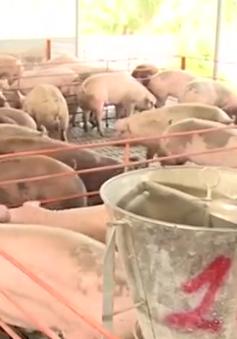 Giải cứu thịt lợn: Không chỉ làm ở phần ngọn
