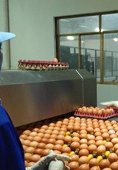 Giảm phí nông nghiệp - Nhẹ gánh cho người chăn nuôi