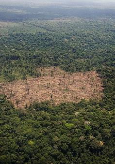 Lá phổi xanh của Trái Đất đang bị tàn phá