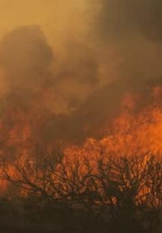 Mỹ tốn hàng chục tỷ USD để tái thiết sau cháy rừng