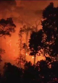 Hàng nghìn người tham gia chữa cháy rừng ở Sóc Sơn, Hà Nội