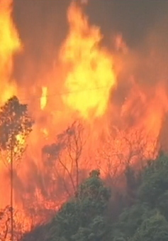 Cháy rừng dữ dội ở Tây Ban Nha, 2 người thiệt mạng