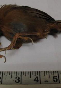 Mỹ: Sinh viên đi tù do giết chết một con chim