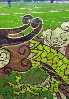 Tranh 3D lớn nhất thế giới trên đồng lúa