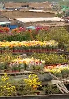 Chợ hoa, cây kiểng Tết và nỗi niềm người bán