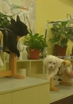 Châm cứu cho chó mèo tại Trung Quốc
