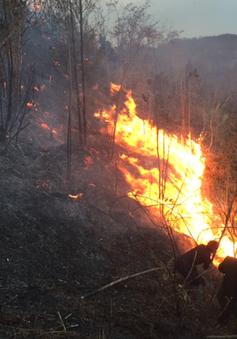 Hà Nội triển khai nhiều biện pháp phòng chống cháy rừng