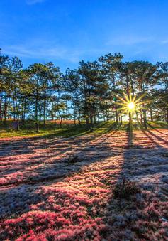 Mùa cỏ hồng đẹp như tranh ở Đà Lạt