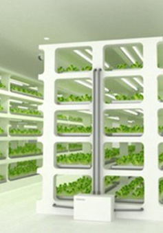 Trồng rau trong tủ bạn đã bao giờ nghe tới chưa?