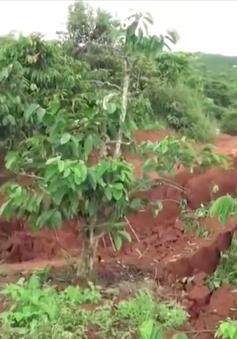 Lâm Đồng: Tiếp tục sạt lở đất, hơn 15 ha cà phê nguy cơ mất trắng