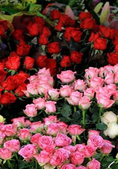 Giá hoa Đà Lạt dịp 20/10 tăng không mạnh như mọi năm