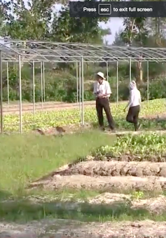 Quảng Nam khó khôi phục các vùng rau sau bão lũ