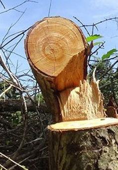 Bình Thuận xác minh nhóm lâm tặc tung tin đồn giả để phá rừng Tà Cú