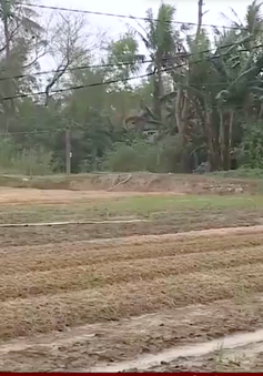 Thừa Thiên Huế nỗ lực tái sản xuất sau lũ