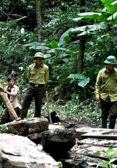 Nghệ An : Khởi tố, bắt tạm giam 2 Trạm trưởng quản lý bảo vệ rừng