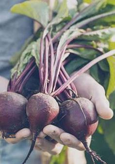 Lợi ích thần kỳ của củ cải đường