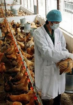 Bắc Giang chủ động phòng dịch cúm gia cầm