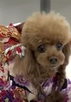 Độc đáo dịch vụ cầu phúc cho vật nuôi ở Nhật Bản