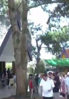 Du khách đến Đà Lạt dịp lễ 2/9 tăng cao
