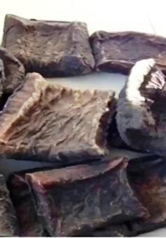 Myanmar: Loài voi gặp nguy hiểm trước nạn lột da làm thuốc