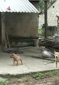 Nghệ An ra công điện khẩn sau khi 53 người nghi bị chó dại cắn