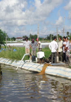 Kiên Giang: Sản lượng thủy sản đánh bắt tăng cao