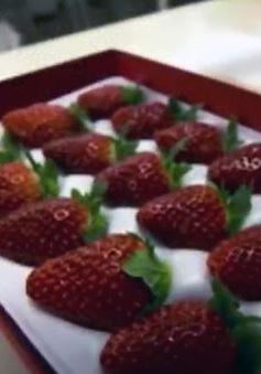Khám phá công nghệ trồng dâu mới tại Nhật Bản