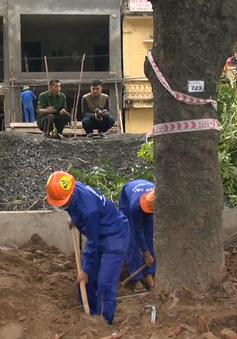 Hà Nội chặt hạ, di dời cây xanh trên đường Phạm Văn Đồng