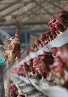 Trung Quốc ghi nhận một trường hợp tử vong vì cúm gia cầm H7N9