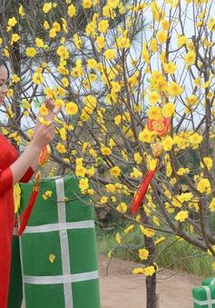 Tết Phố - Đón Tết Nguyên đán đậm văn hoá Hà Nội