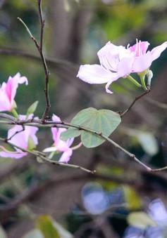 Người dân Hà Nội sẽ được đón một Lễ hội hoa ban đẹp rực rỡ