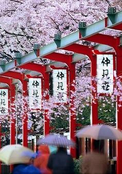 Cơ hội du học tại Nhật miễn phí trong ngành điều dưỡng chăm sóc