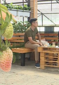 Cà phê giữa vườn rau - Sức hút du lịch nhà vườn Đà Lạt