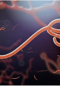 WHO tuyên bố chấm dứt dịch Ebola tại Congo