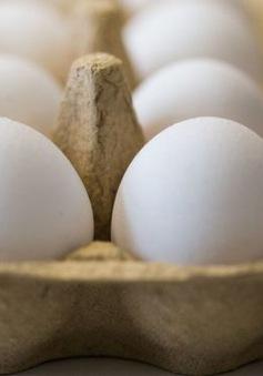 """Hà Lan: 2 đối tượng liên quan đến vụ trứng """"bẩn"""" hầu tòa"""