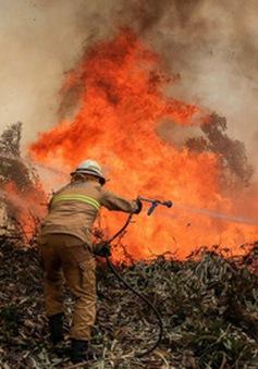 Bồ Đào Nha nỗ lực ngăn cháy rừng lan rộng