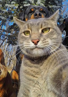 Không chỉ con người, các loài vật cũng có ảnh selfie cực chất