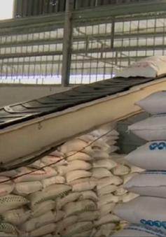 Xuất khẩu gạo tăng trưởng với những điểm sáng