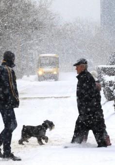 Anh: Trường học đóng cửa, nhiều chuyến bay bị hủy vì giá rét