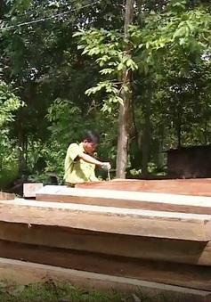 Quảng Nam triệt phá đường dây vận chuyển gỗ quy mô lớn