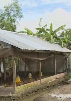 Phát hiện thêm ổ dịch cúm H5N1 tại Bạc Liêu