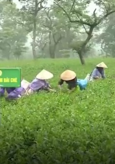 Hà Tĩnh: Du lịch trải nghiệm làng quê nông thôn mới hút khách