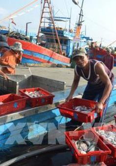 Việt Nam cam kết chống khai thác hải sản bất hợp pháp