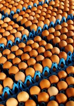 Hàn Quốc lệnh thanh tra toàn ngành thực phẩm