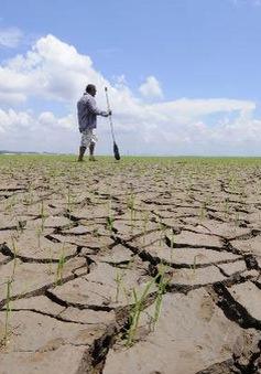 Brazil báo động hạn hán trầm trọng nhất trong 17 năm qua