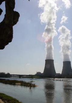 """Greenpeace cảnh báo """"thảm họa Fukushima"""" ở châu Âu"""