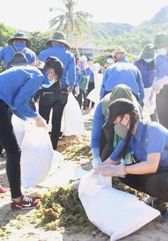 Đoàn viên thanh niên Bình Định tình nguyện làm sạch môi trường biển