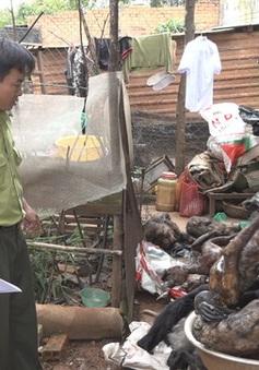 Lâm Đồng: Phát hiện nhiều cá thể động vật hoang dã trong quán nhậu